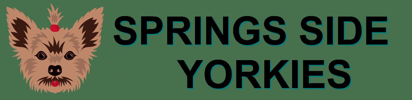 yorkie for sale near
